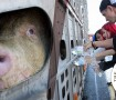 Bearing Witness to the slaughter of animals worldwide