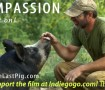 Compassion-Pass-It-On-705x396